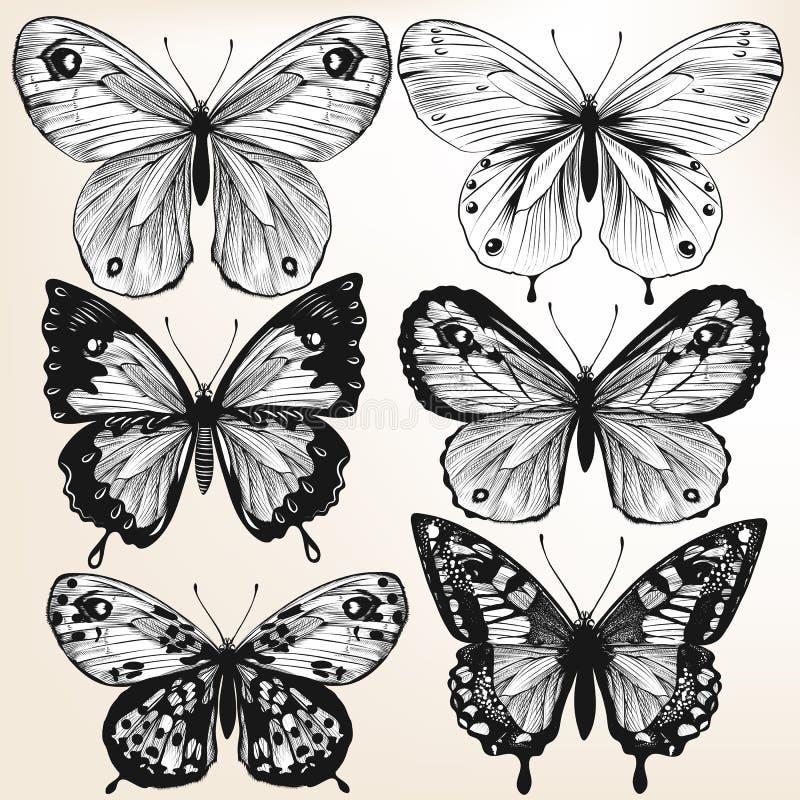 传染媒介手拉的详细的蝴蝶的汇集设计的 库存例证