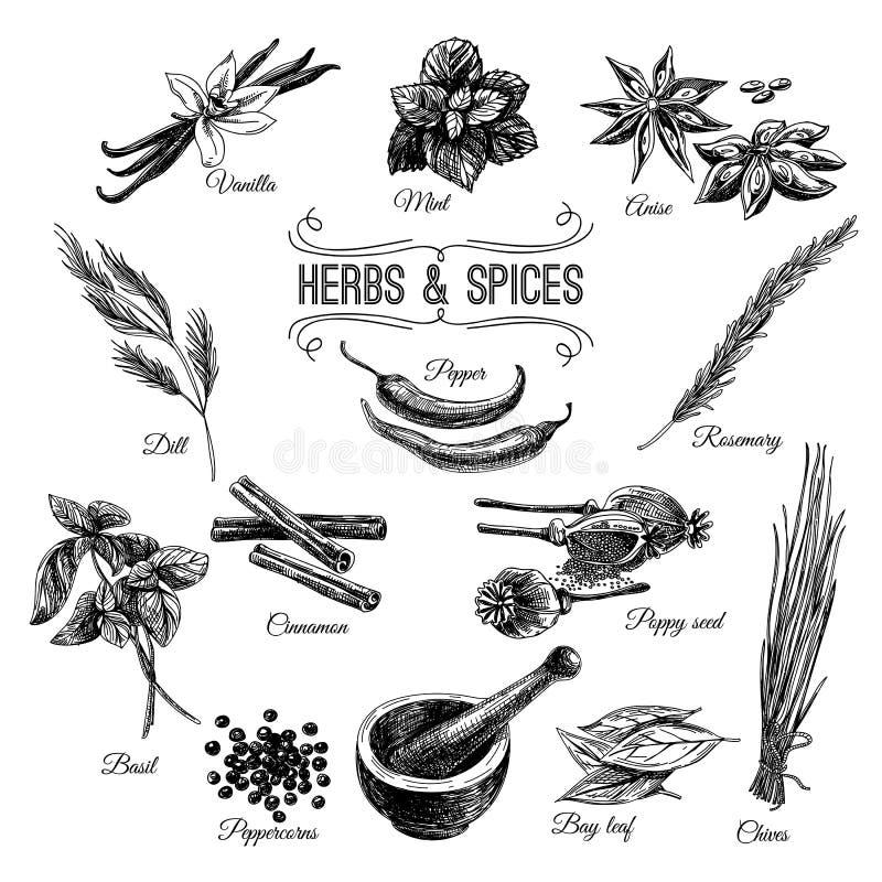 传染媒介手拉的集合用草本香料 库存例证