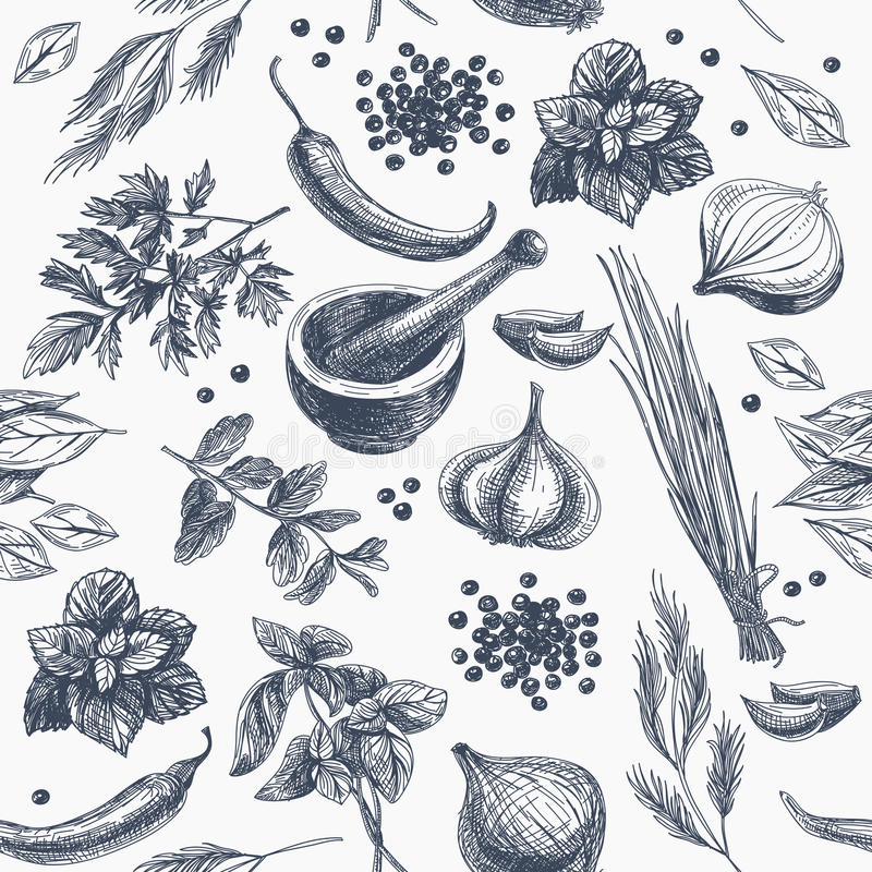 传染媒介无缝的样式用草本和香料 库存例证