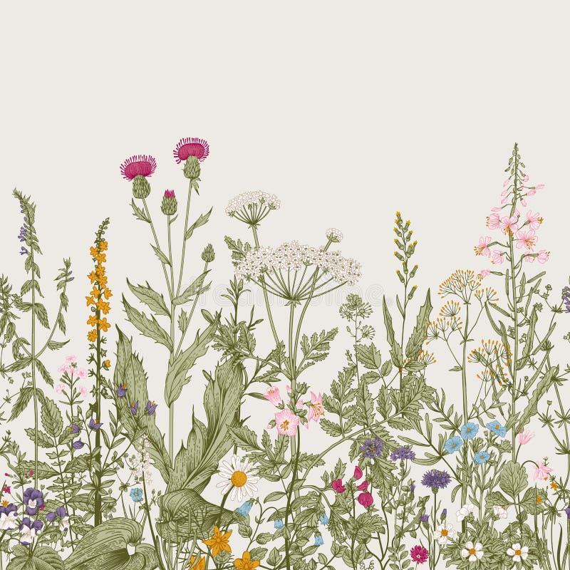 传染媒介无缝的花卉边界 向量例证