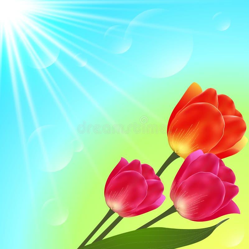 传染媒介晴朗的郁金香开花花束卡片模板 向量例证