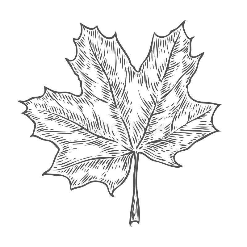 传染媒介秋天手拉的叶子 传染媒介被刻记的对象 详细的植物的例证 橡木,槭树,栗子叶子sketc 库存例证