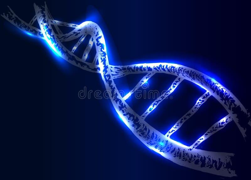 传染媒介脱氧核糖核酸结构 皇族释放例证