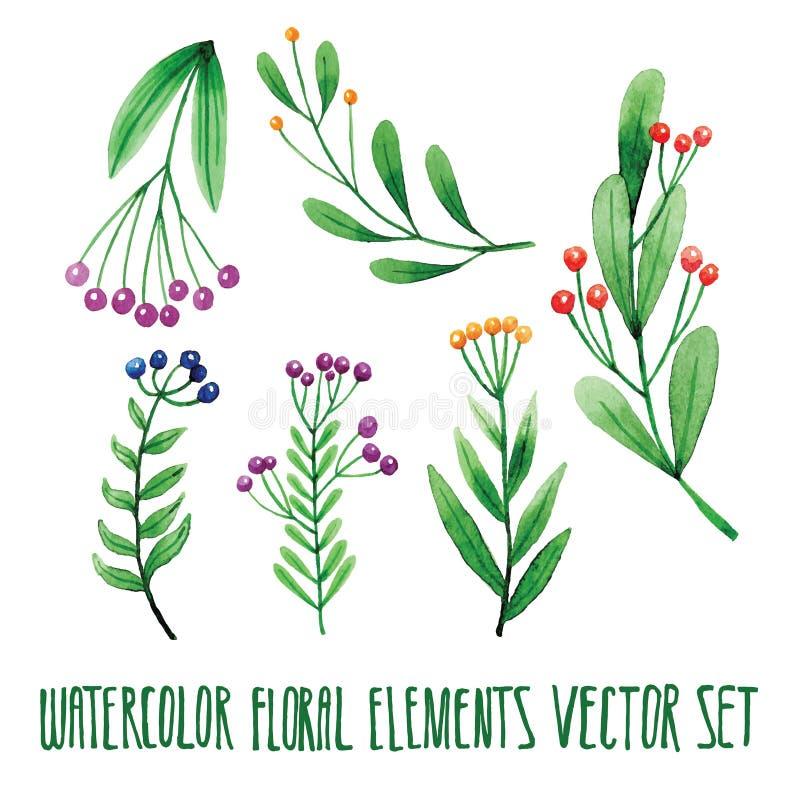 传染媒介花卉集合 与叶子的五颜六色的花卉收藏,画的水彩 春天或夏天设计邀请的,婚礼或 库存例证