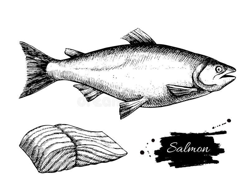 传染媒介葡萄酒三文鱼图画 手拉的单色海鲜不适 皇族释放例证