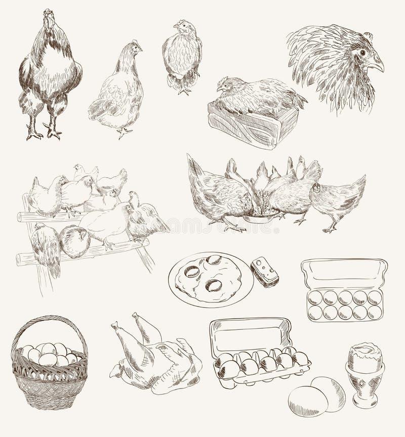 传染媒介蛋鸡饲养集合 皇族释放例证
