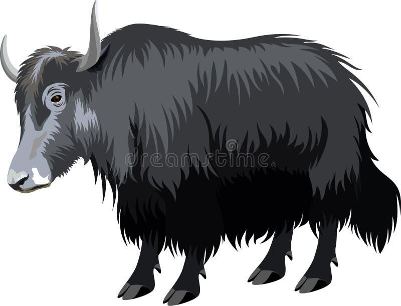 传染媒介西藏人牦牛 库存例证