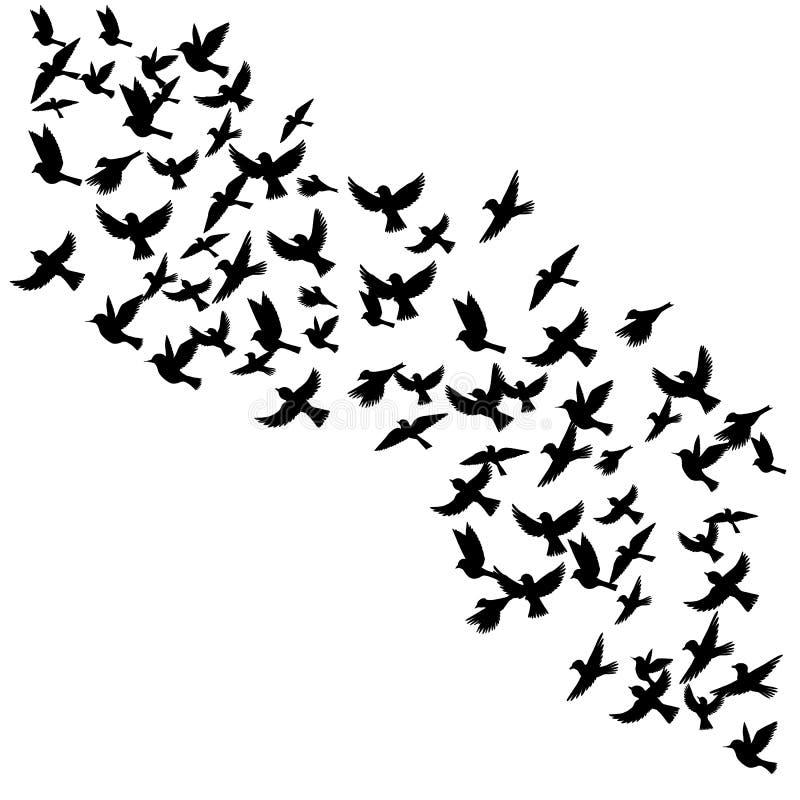 传染媒介飞鸟剪影. 许多, 形成.