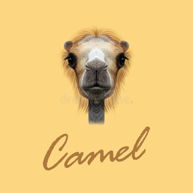 传染媒介骆驼被说明的画象  向量例证