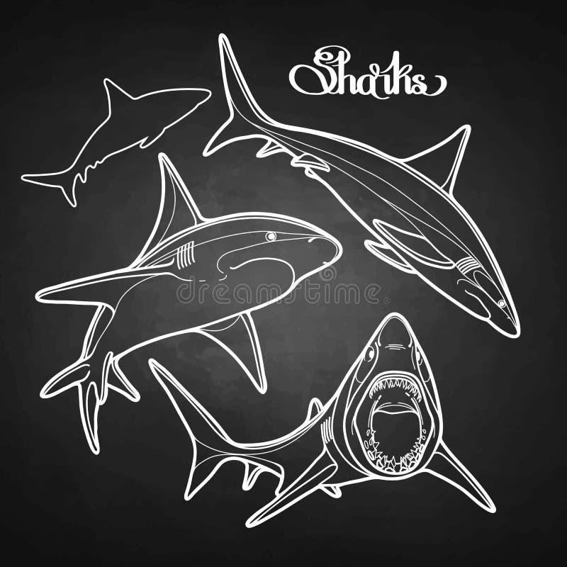 传染媒介鲨鱼的图表收藏 向量例证