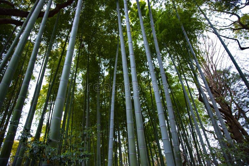 传统公园的竹森林 免版税库存照片