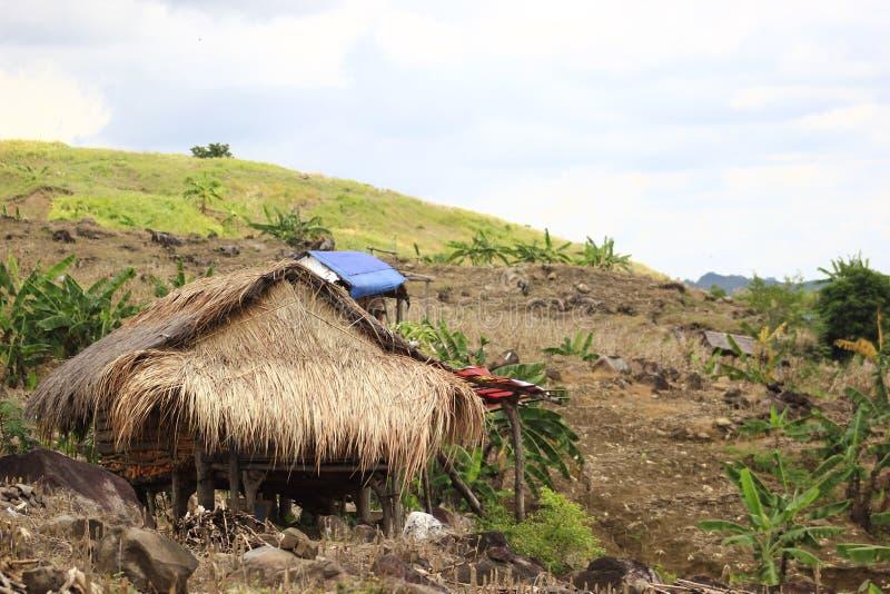 传统家庭玉米的存贮 库存图片