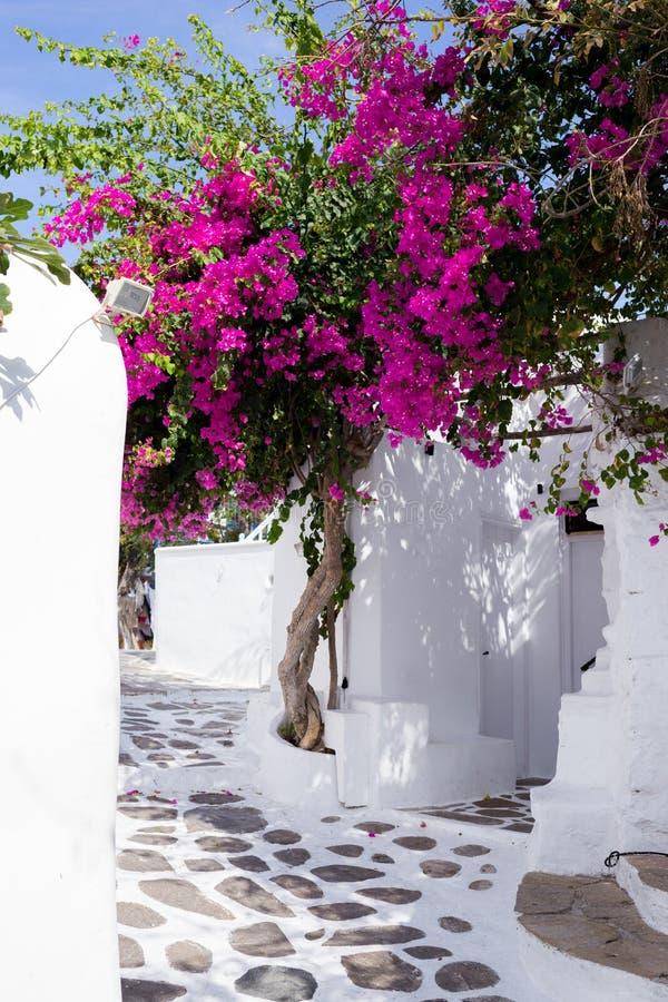 传统狭窄的街道在米科诺斯岛 免版税图库摄影