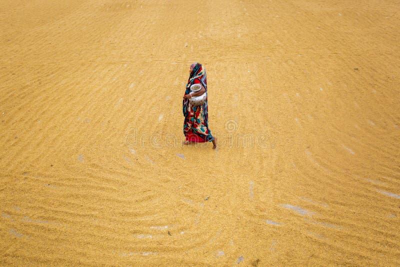 传统碾米机工作者移交烘干的稻 免版税图库摄影