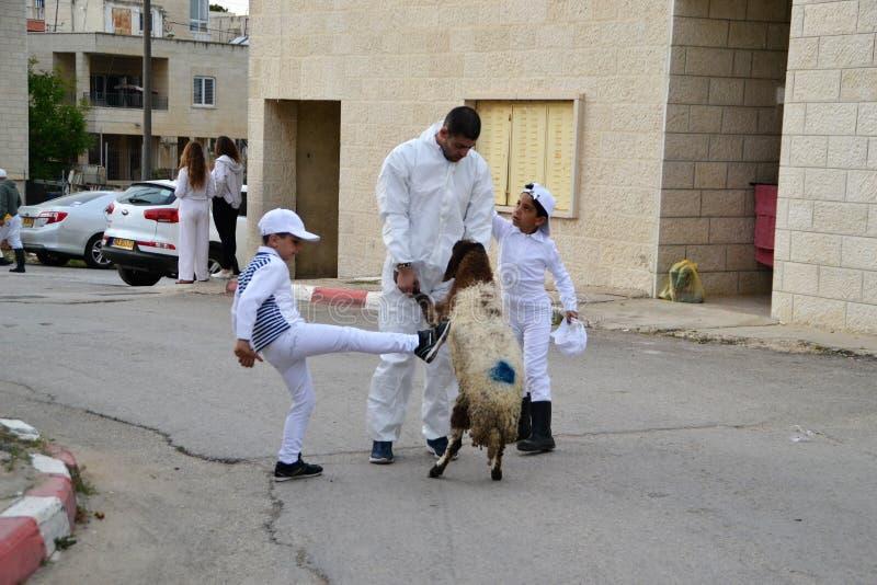 传统逾越节牺牲的撒马利亚人人在纳布卢斯2017年以色列羊羔西岸城市的附近登上Gerizim 免版税库存照片