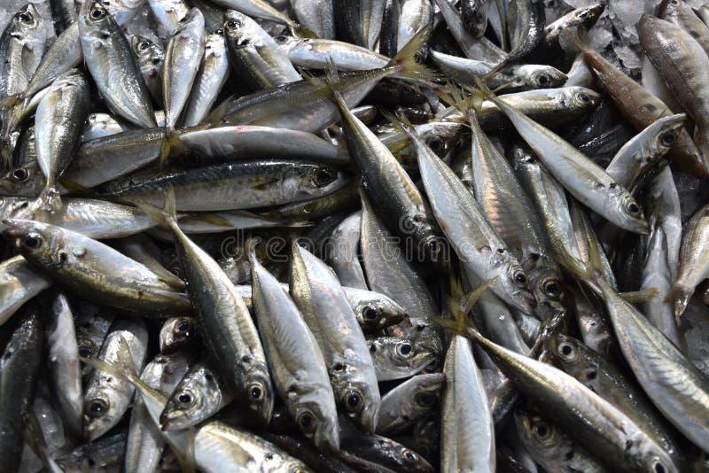 传统鱼贩子在葡萄牙在Loulé 库存图片