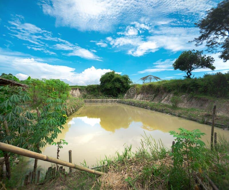 传统鲶鱼渔场 鲶鱼孵卵站泥泞的布朗池塘的水产养殖农场 免版税库存图片