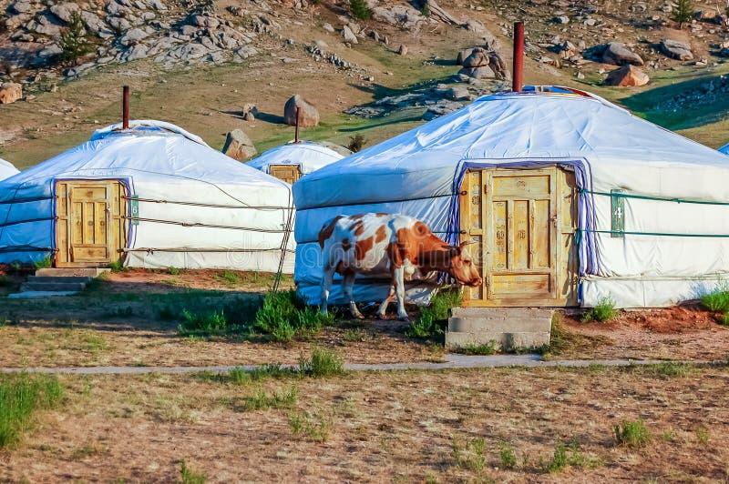 传统yurts叫旅游阵营的,蒙古热尔省 免版税库存照片