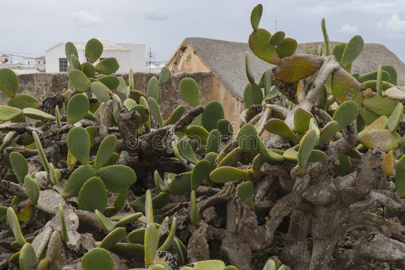 Download 传统建筑在特吉塞 库存照片. 图片 包括有 仙人掌, 咖啡馆, 对比, 欧洲, 严重, 绿色, 阿尔马, 蓝色 - 59100536