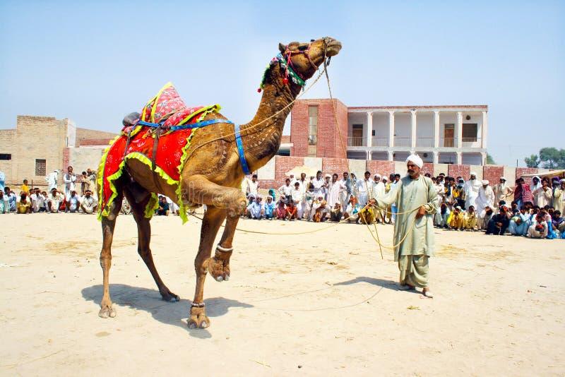 传统骆驼舞蹈 库存图片