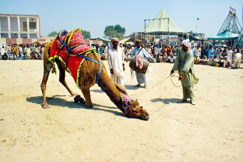 传统骆驼舞蹈 免版税库存图片