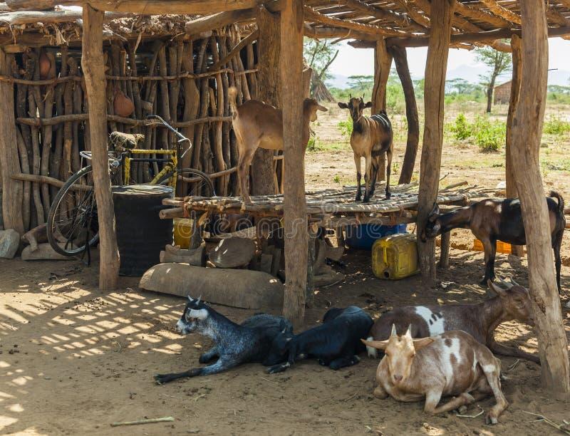 传统tsemay房子 Omo谷 埃塞俄比亚 免版税库存图片