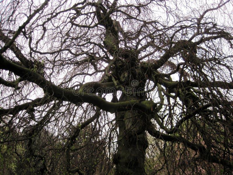 伦敦公园干树原始的背景 排行弯曲 免版税库存照片