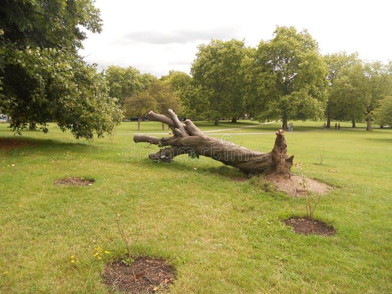 伦敦,公园报春花小山睡觉树 库存照片