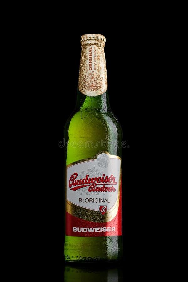伦敦,英国- 2017年3月30日:瓶在黑色,其中一的百威Budvar啤酒最高的销售的啤酒在捷克 免版税图库摄影