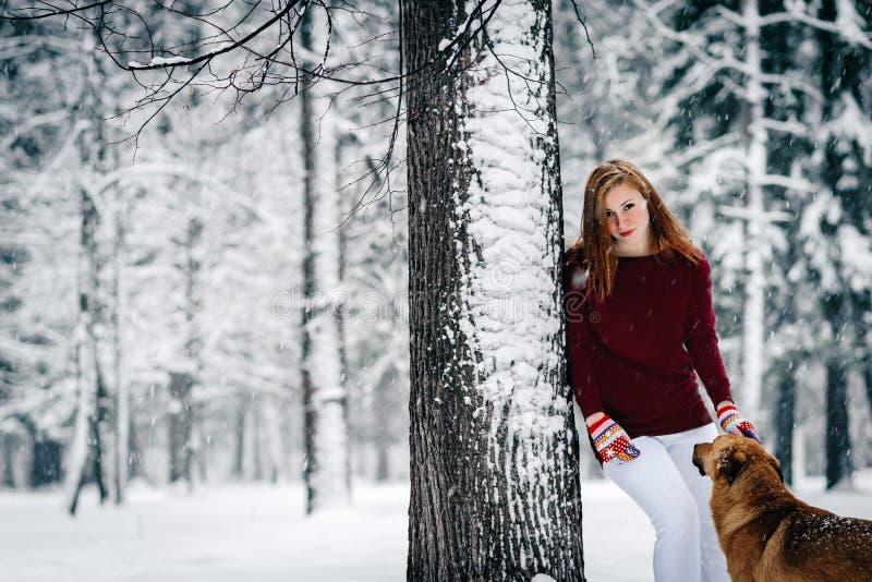伯根地毛线衣和白色裤子的一个女孩站立倾斜反对树在积雪的森林中的红色狗附近 库存图片
