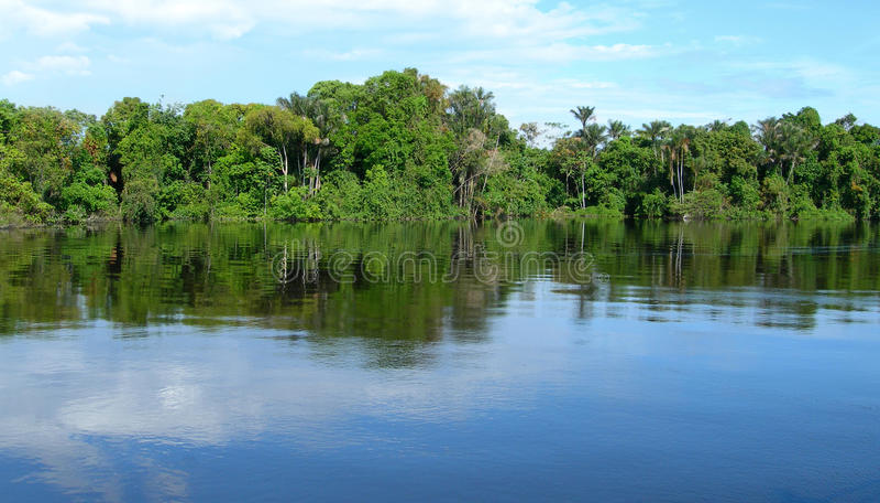 似亚马逊巴西森林 免版税库存照片