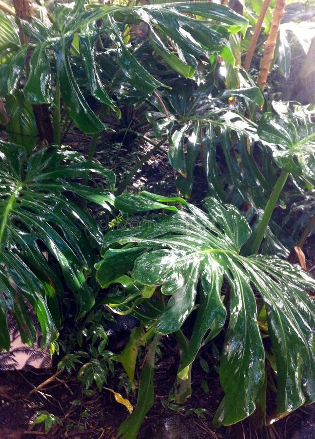 似亚马逊绿色叶子 库存照片