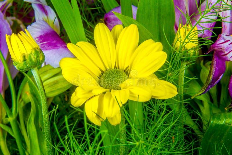 类似在绿色背景的黄色花图象一朵雏菊 库存照片