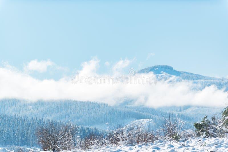 位于在岩石峰顶的森林  免版税库存照片