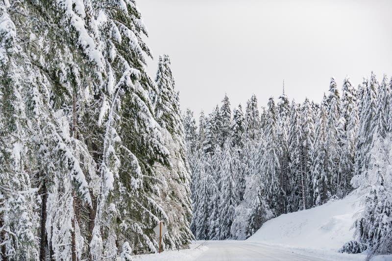 位于在森林里的路线在美国 免版税库存图片