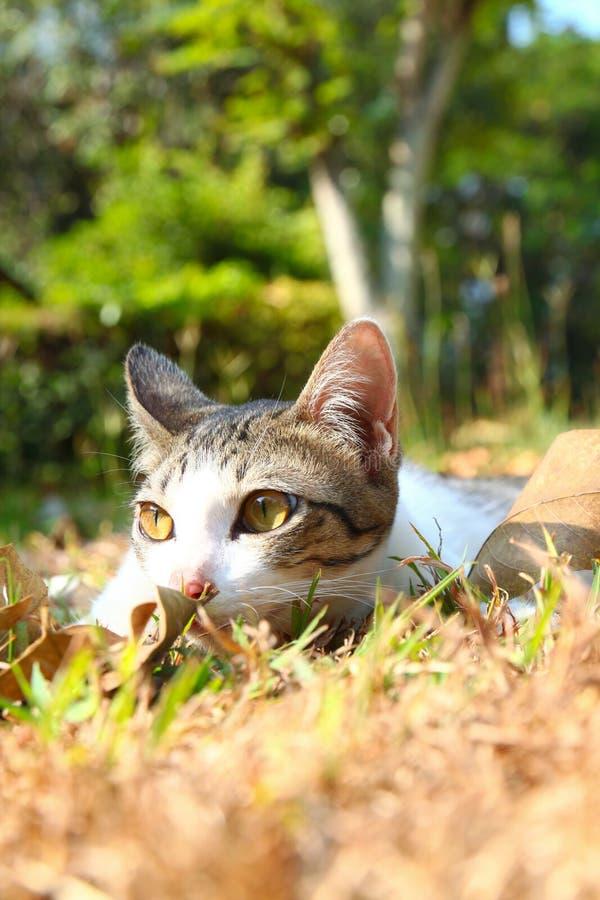 Download 位于在草的一只孤独的猫 库存照片. 图片 包括有 公园, 表达式, 敌意, 孤独, 日志, 迷住, 眼睛 - 22358756