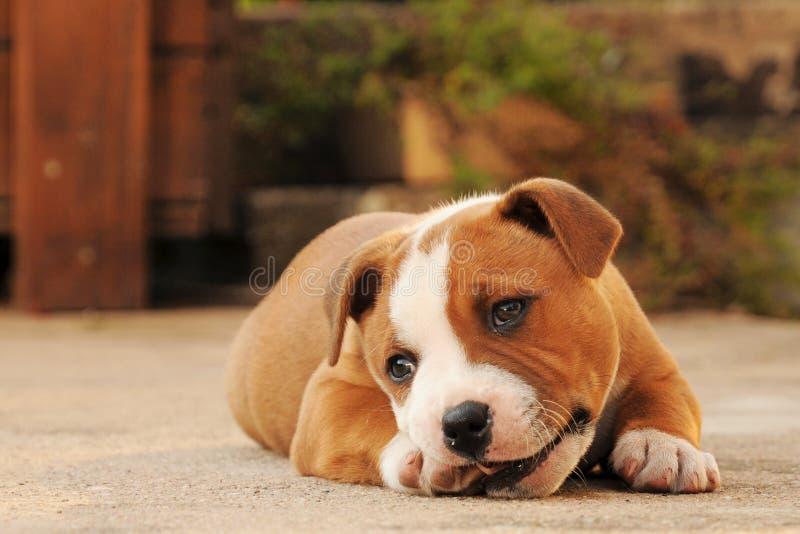位于的小狗 免版税库存图片