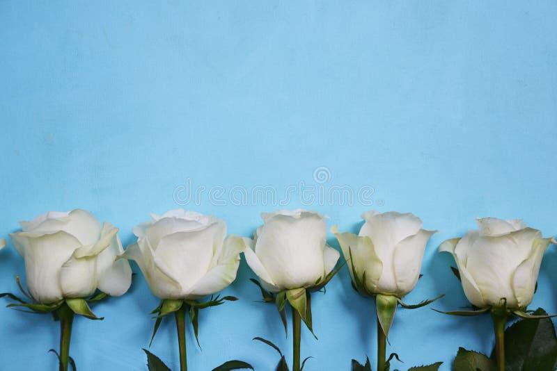 位于线的白玫瑰蓝色背景 库存图片