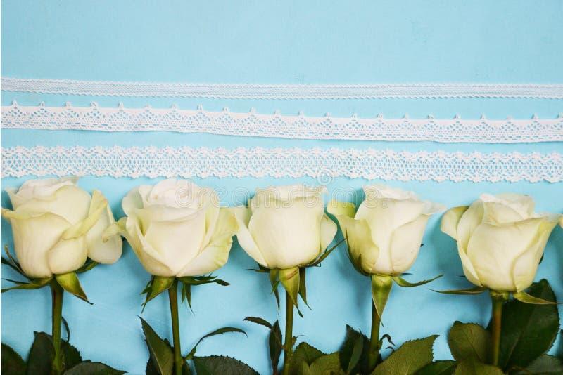 位于线的白玫瑰蓝色背景 免版税库存照片