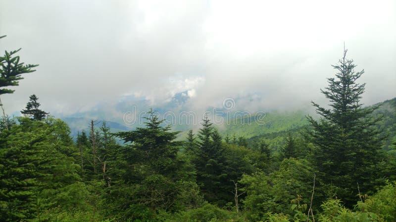 低云和杉树 免版税库存图片