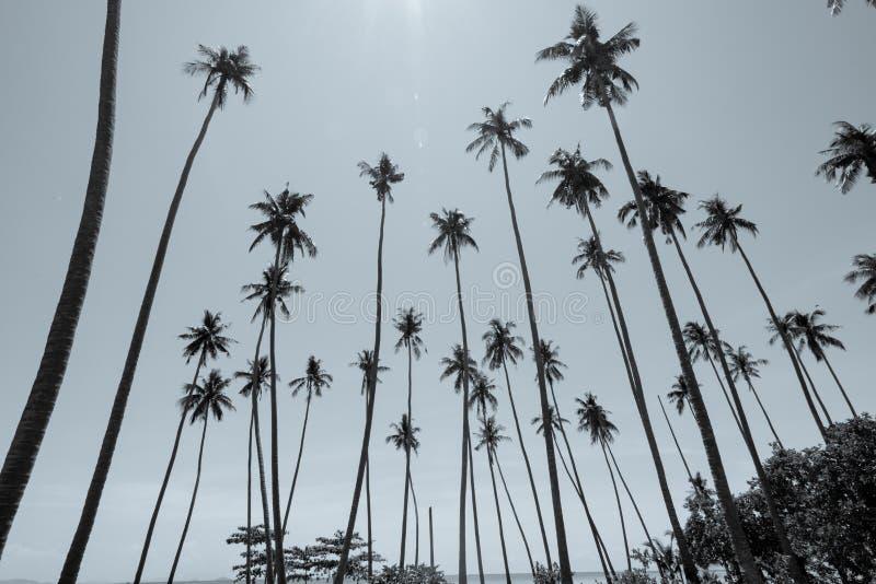 低反对天空蔚蓝的观点热带可可椰子与透镜火光 免版税库存图片