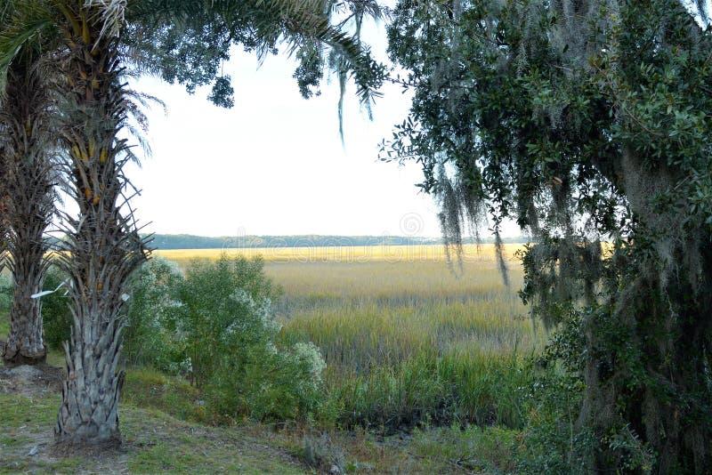低地国家沼泽土地可能以茂盛植物为特色标示用青苔 免版税库存照片