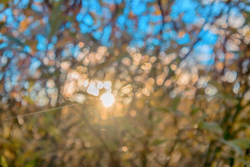 低太阳在北极冬天前,树和灌木丢失前黄色 免版税库存图片