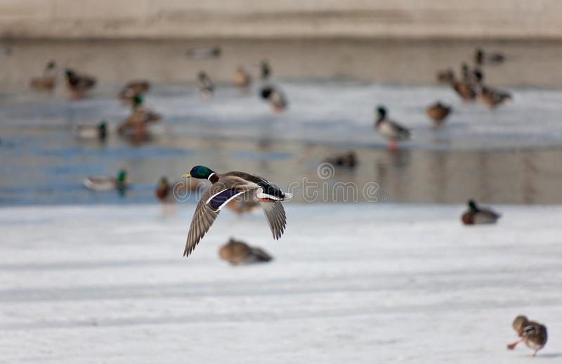 低头河冬天 库存图片