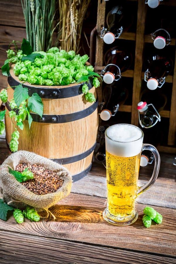 低度黄啤酒由新鲜的蛇麻草做成 库存图片