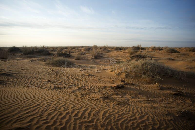 低灌木在干旱的沙漠 库存照片