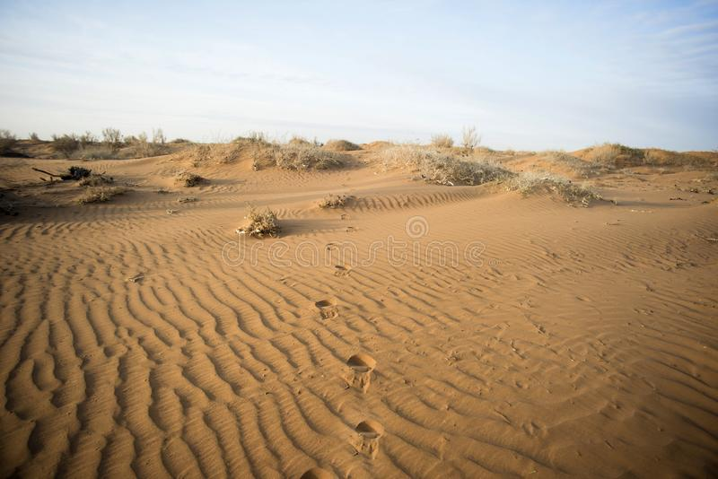 低灌木在干旱的沙漠 免版税库存图片