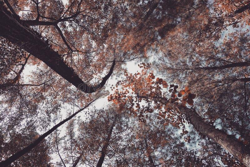 低角度季节树在森林里 库存照片