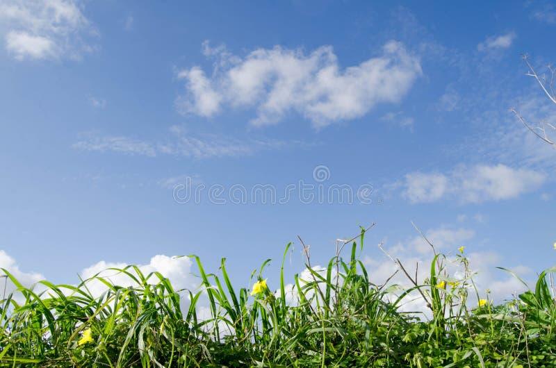 低角度观点的反对蓝天的新鲜的草与云彩 免版税库存图片