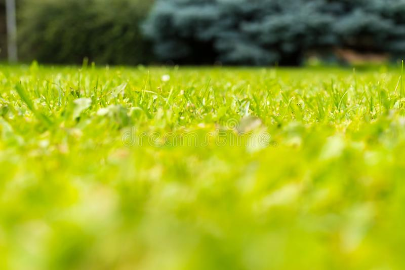 低角度观点的绿色新鲜的草 免版税图库摄影